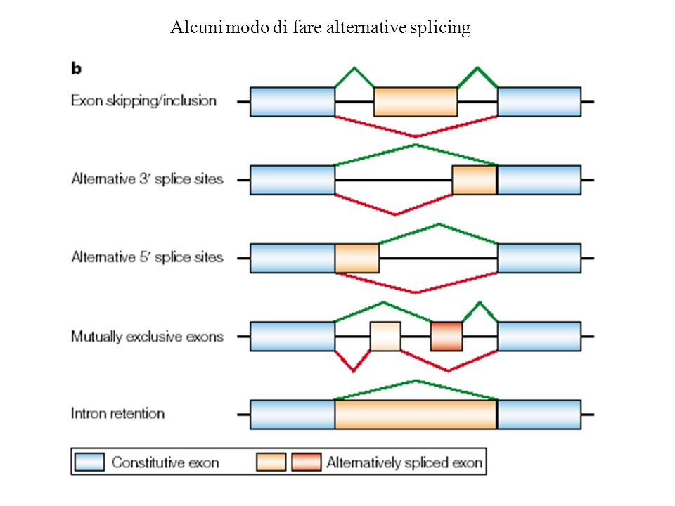 Alcuni modo di fare alternative splicing