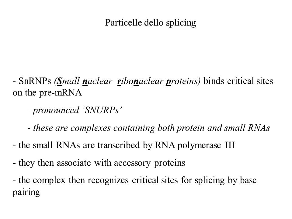 - SnRNPs (Small nuclear ribonuclear proteins) binds critical sites on the pre-mRNA - pronounced SNURPs - these are complexes containing both protein a