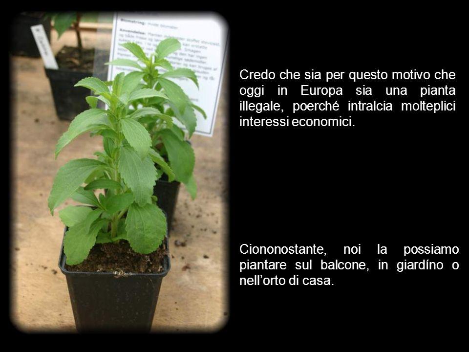 Sembra impossibile che in una sola pianta possano essere contenute così tante proprietà.