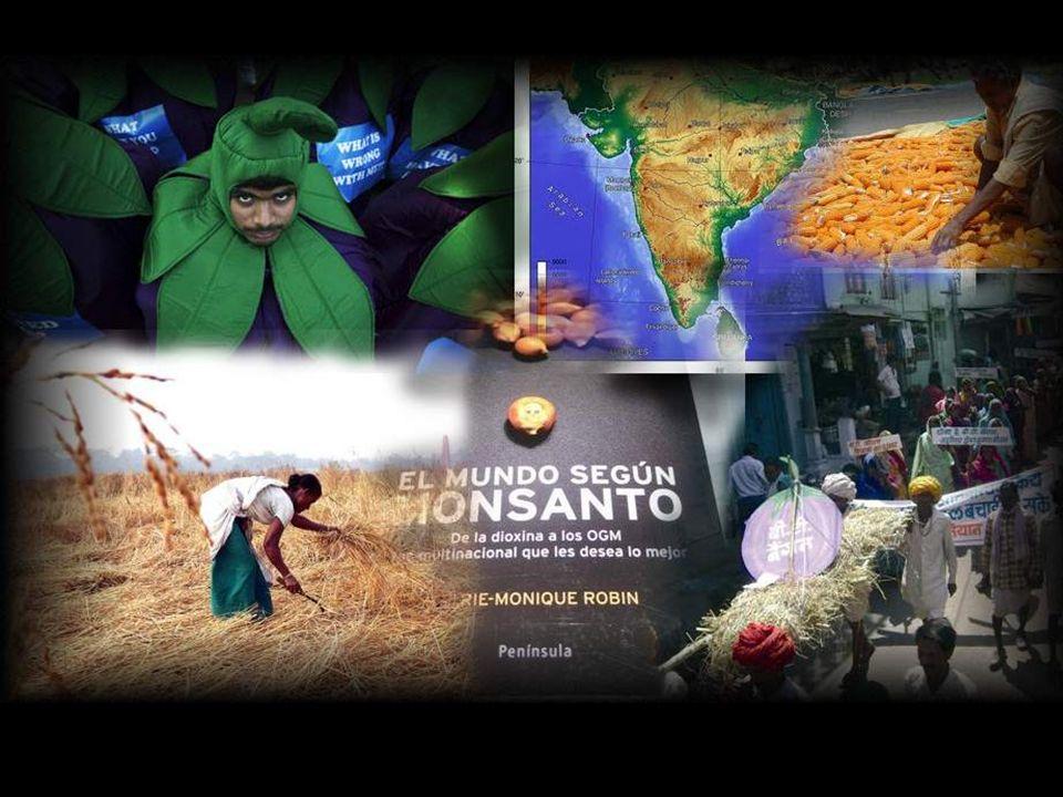 Qusto fattore provoca, per esempio in India, circa 2.000 suicidi allanno di contadini per aver perso le loro sementi a causa della contaminazione caus
