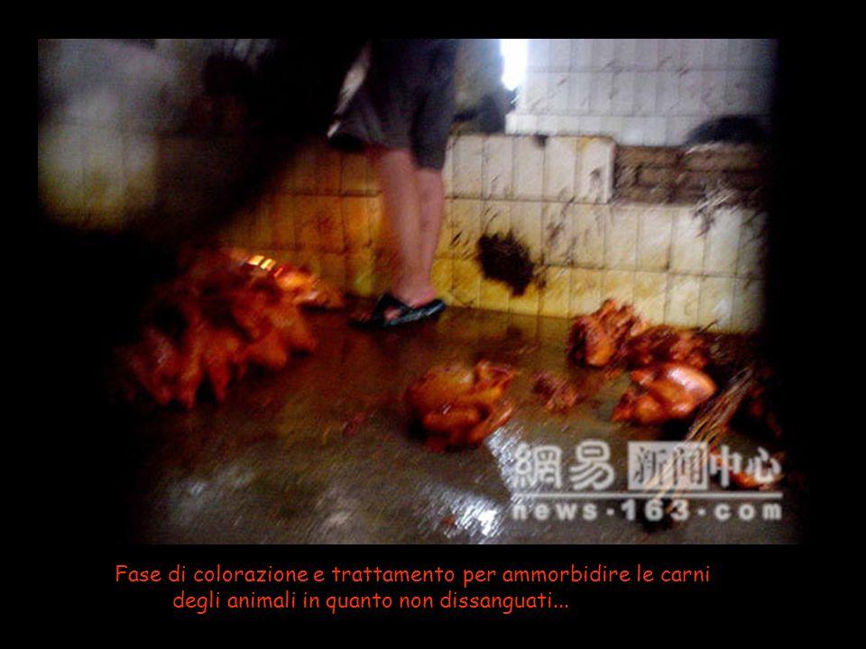 Una vasca di acqua contaminata con sostanze chimiche per ritardare il processo di decomposizione...