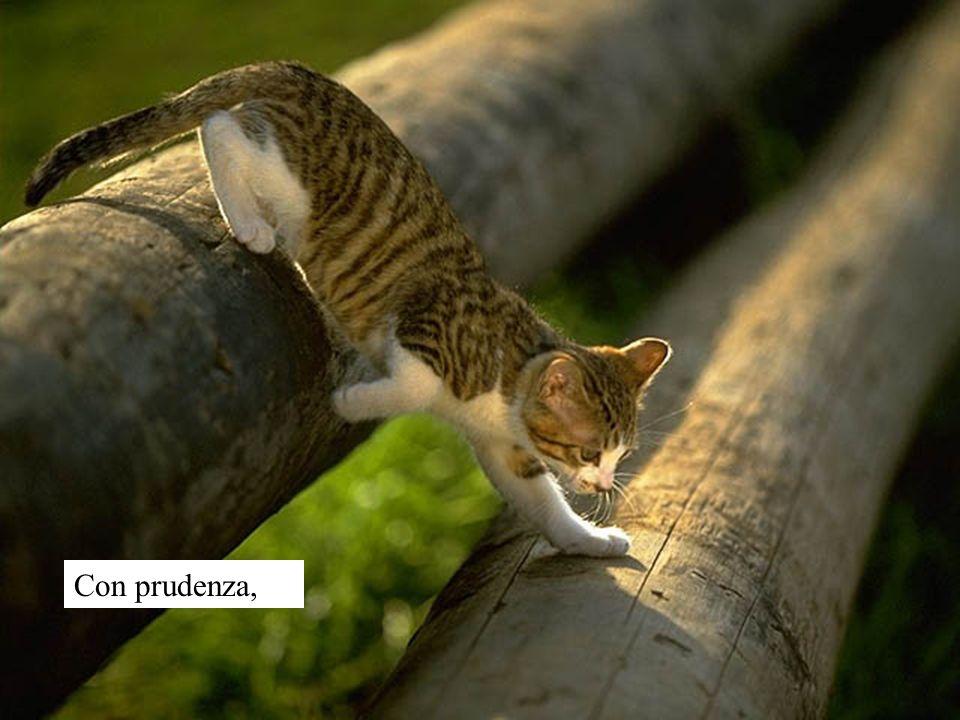 Con prudenza,