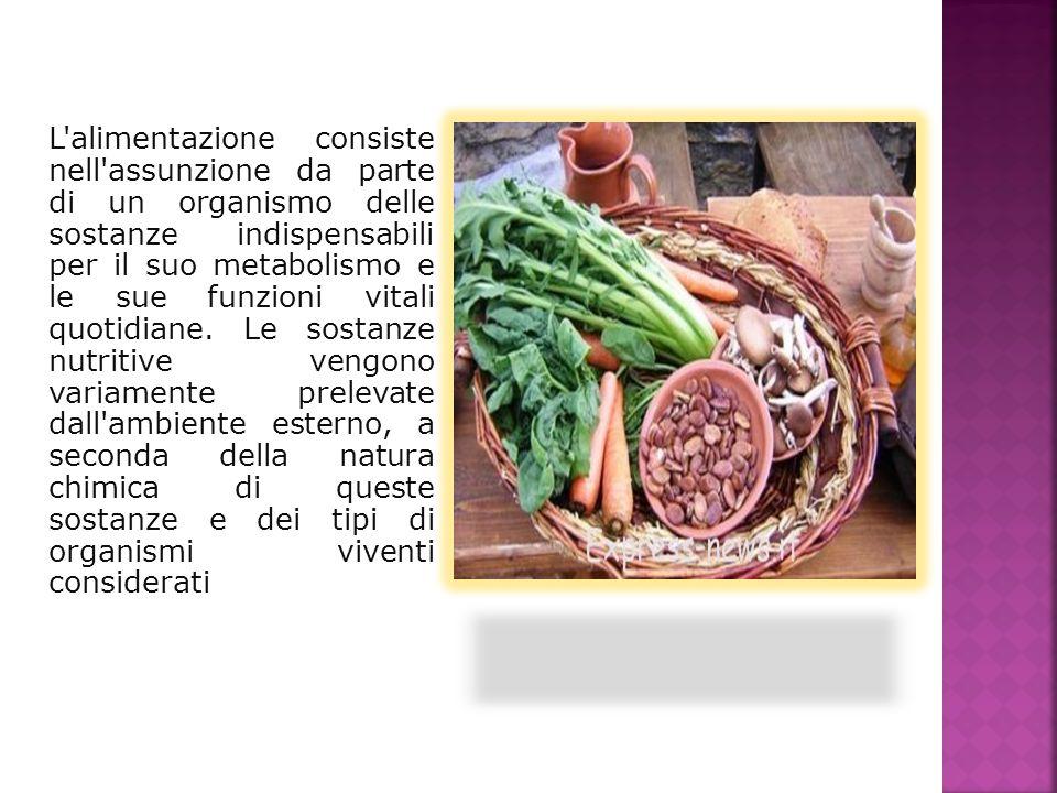 L'alimentazione consiste nell'assunzione da parte di un organismo delle sostanze indispensabili per il suo metabolismo e le sue funzioni vitali quotid