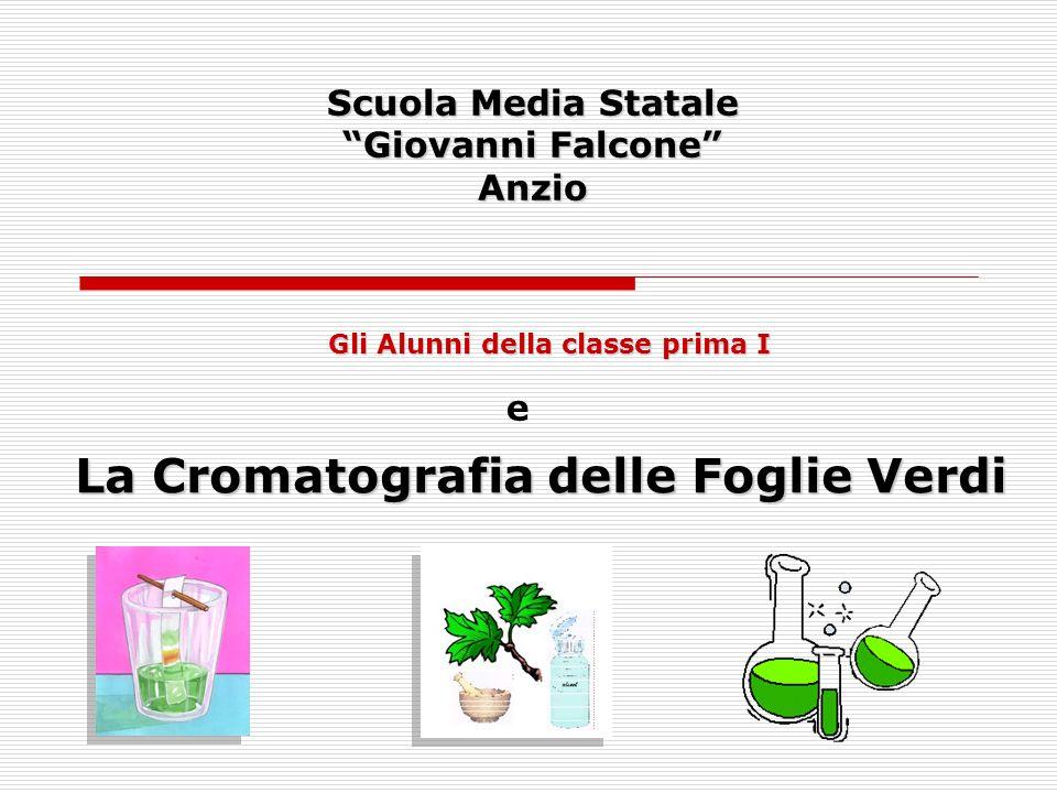 Scuola Media Statale Giovanni Falcone Anzio La Cromatografia delle Foglie Verdi Gli Alunni della classe prima I e