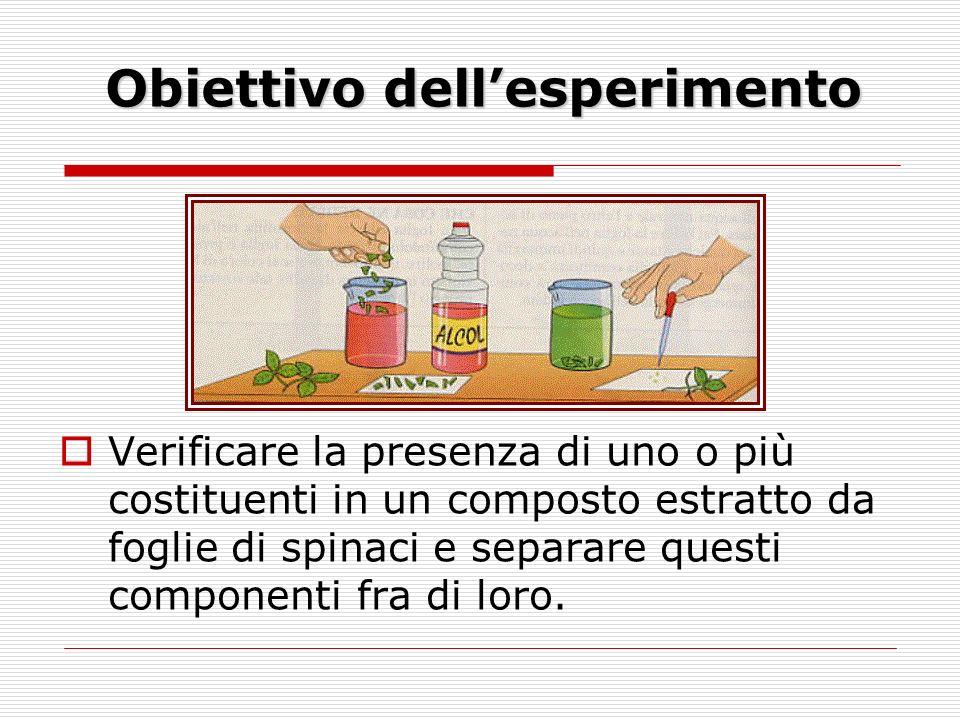 Obiettivo dellesperimento Verificare la presenza di uno o più costituenti in un composto estratto da foglie di spinaci e separare questi componenti fra di loro.