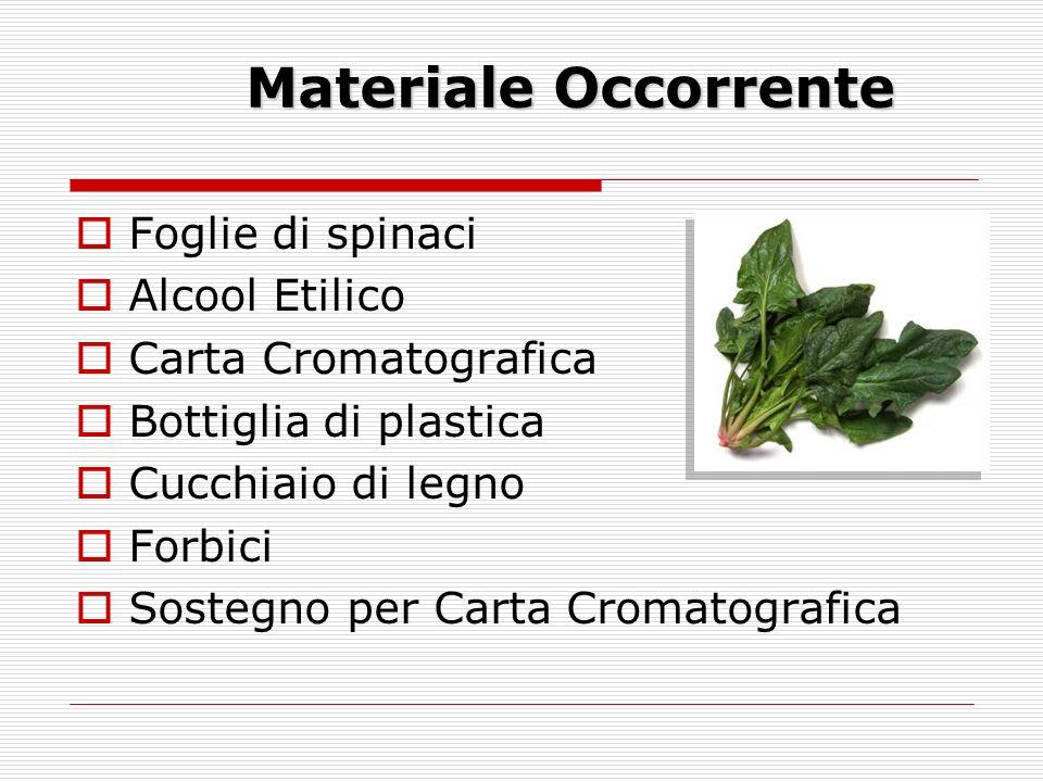 Materiale Occorrente Foglie di spinaci Alcool Etilico Carta Cromatografica Bottiglia di plastica Cucchiaio di legno Forbici Sostegno per Carta Cromatografica