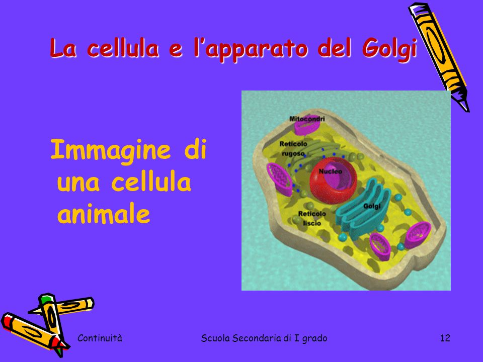 Immagine di una cellula animale ContinuitàScuola Secondaria di I grado12