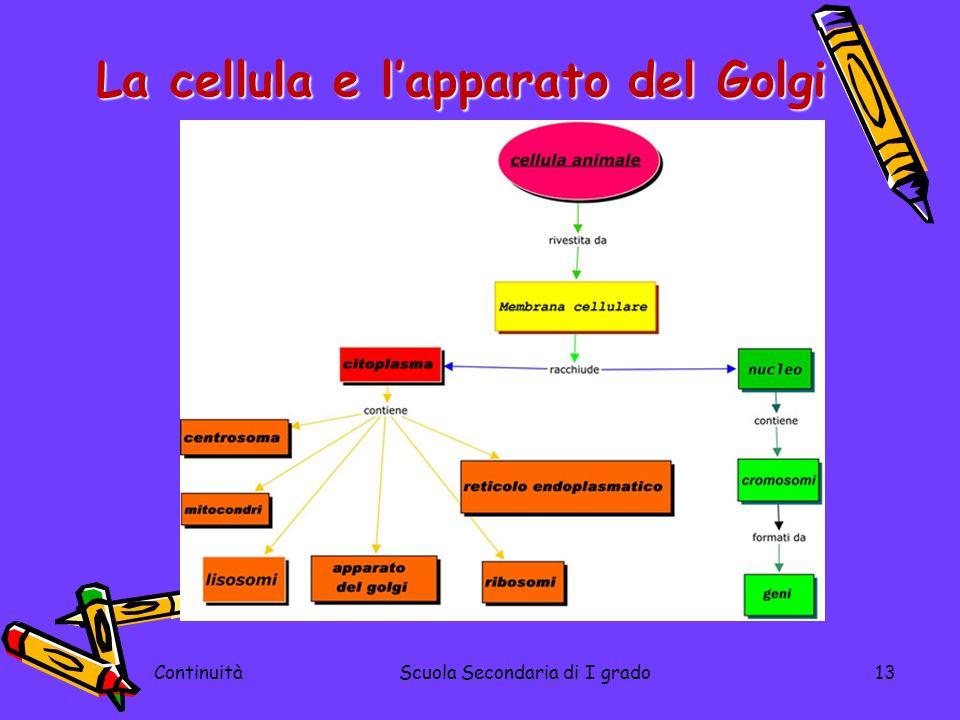 ContinuitàScuola Secondaria di I grado13 La cellula e lapparato del Golgi