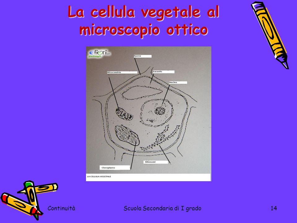 La cellula vegetale al microscopio ottico ContinuitàScuola Secondaria di I grado14