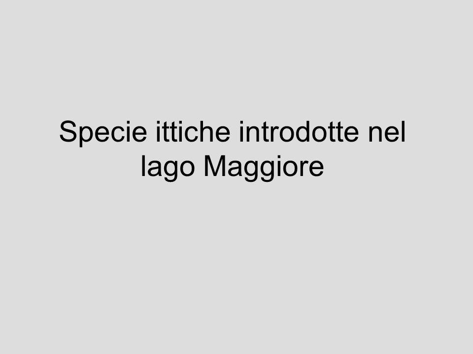 Specie ittiche introdotte nel lago Maggiore