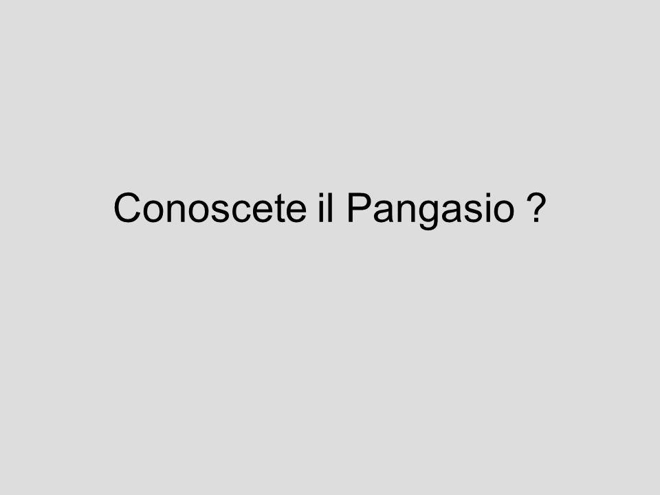 Conoscete il Pangasio ?