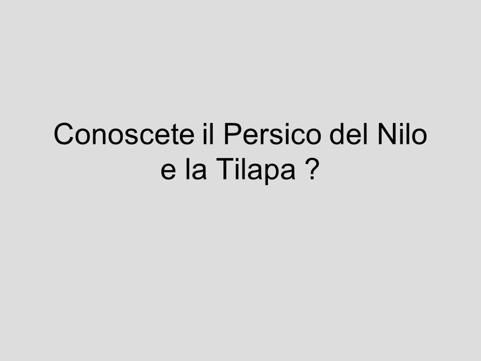 Conoscete il Persico del Nilo e la Tilapa ?