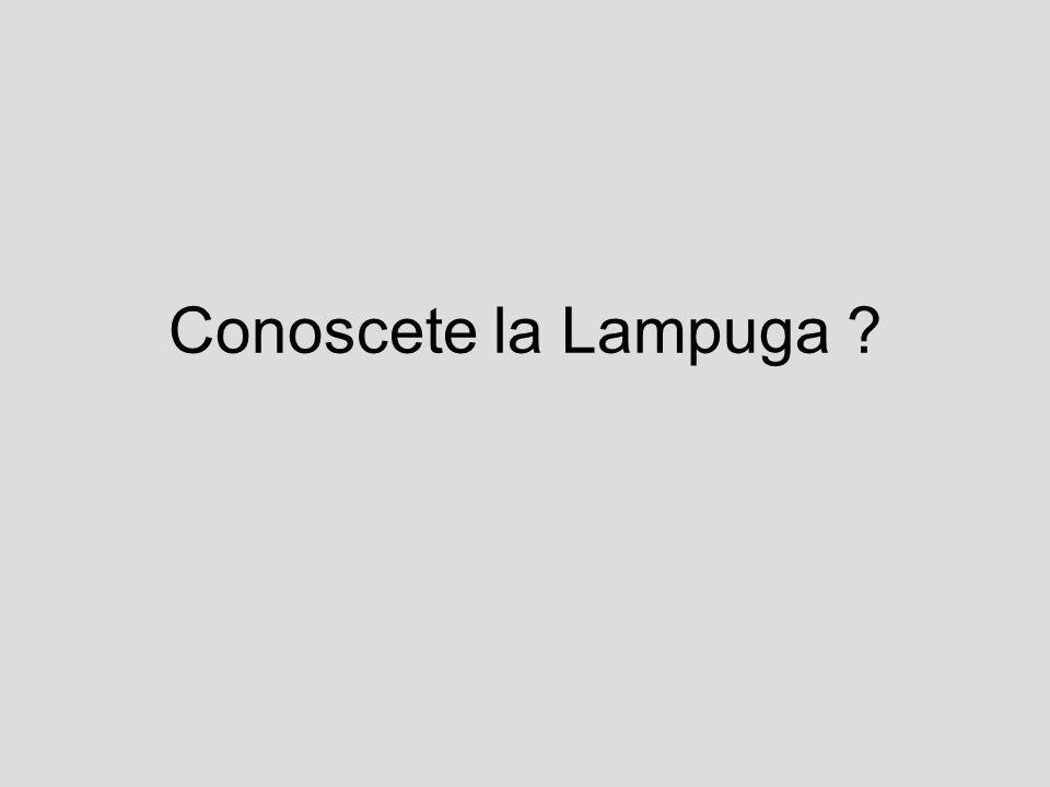 Conoscete la Lampuga ?