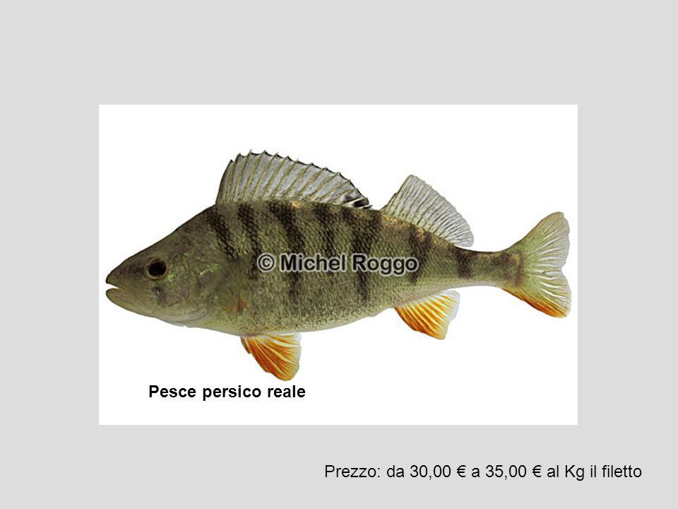 Pesce persico reale Prezzo: da 30,00 a 35,00 al Kg il filetto