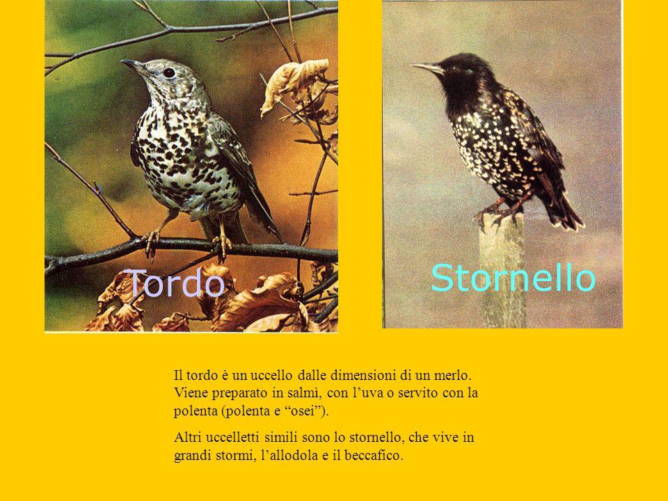 Tordo Stornello Il tordo è un uccello dalle dimensioni di un merlo.