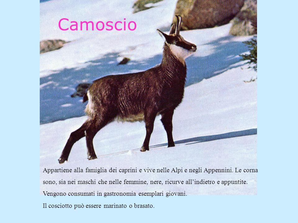 Camoscio Appartiene alla famiglia dei caprini e vive nelle Alpi e negli Appennini.