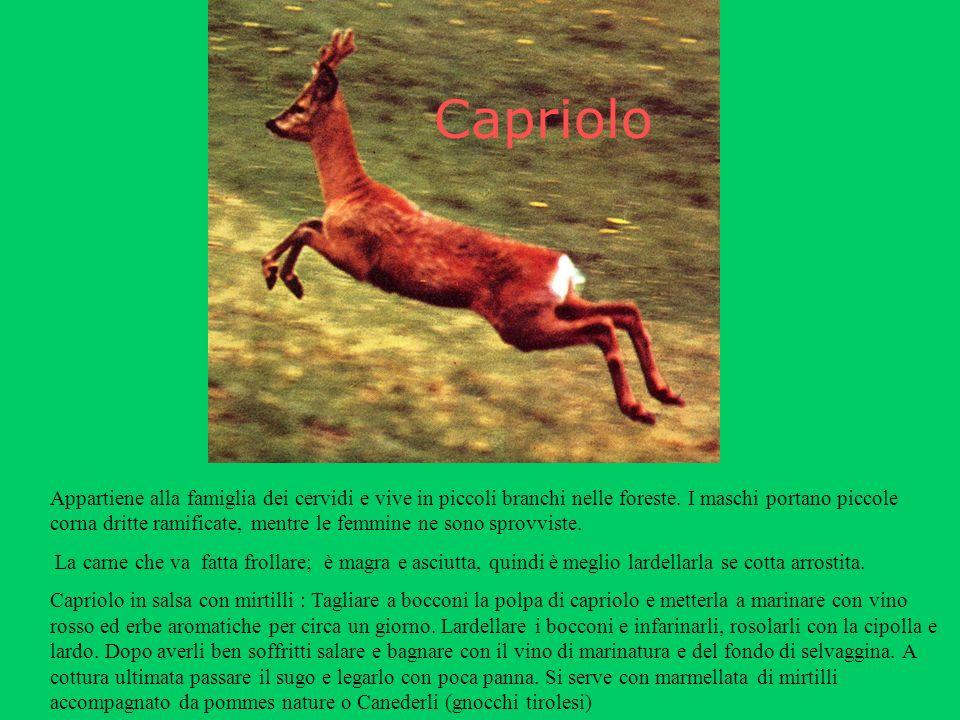 Capriolo Appartiene alla famiglia dei cervidi e vive in piccoli branchi nelle foreste.