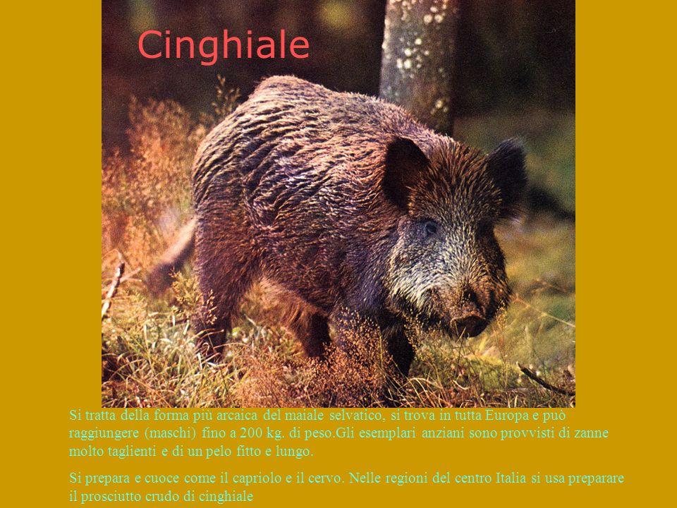 Cinghiale Si tratta della forma più arcaica del maiale selvatico, si trova in tutta Europa e può raggiungere (maschi) fino a 200 kg.