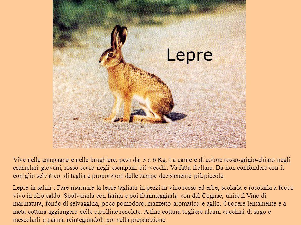 Lepre Vive nelle campagne e nelle brughiere, pesa dai 3 a 6 Kg.