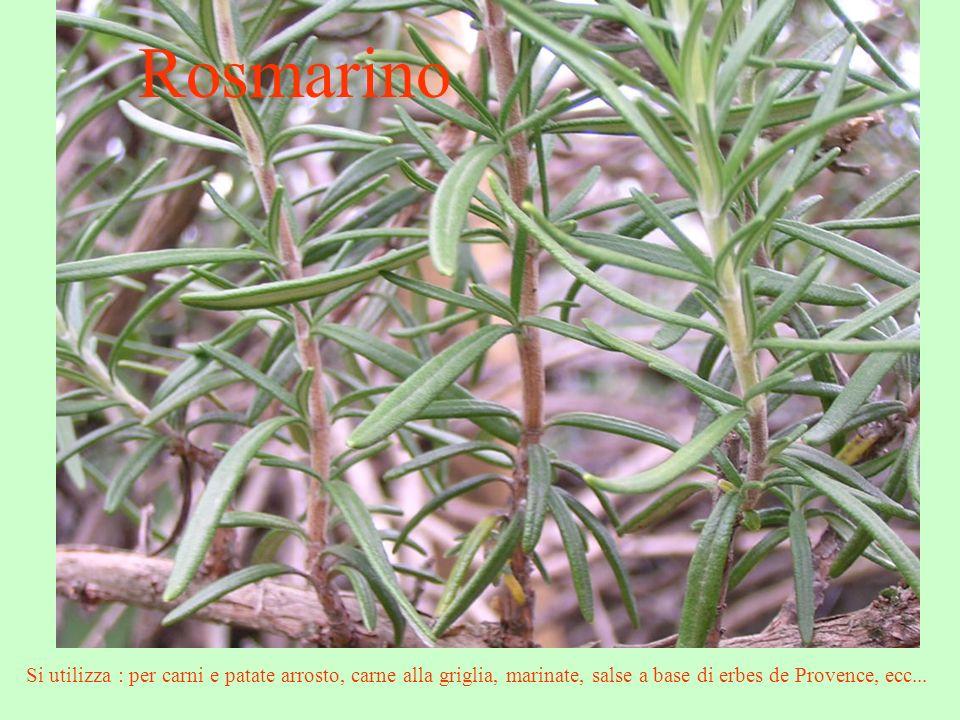 Rosmarino Si utilizza : per carni e patate arrosto, carne alla griglia, marinate, salse a base di erbes de Provence, ecc...