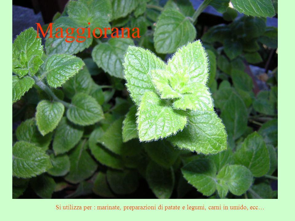 Maggiorana Si utilizza per : marinate, preparazioni di patate e legumi, carni in umido, ecc…