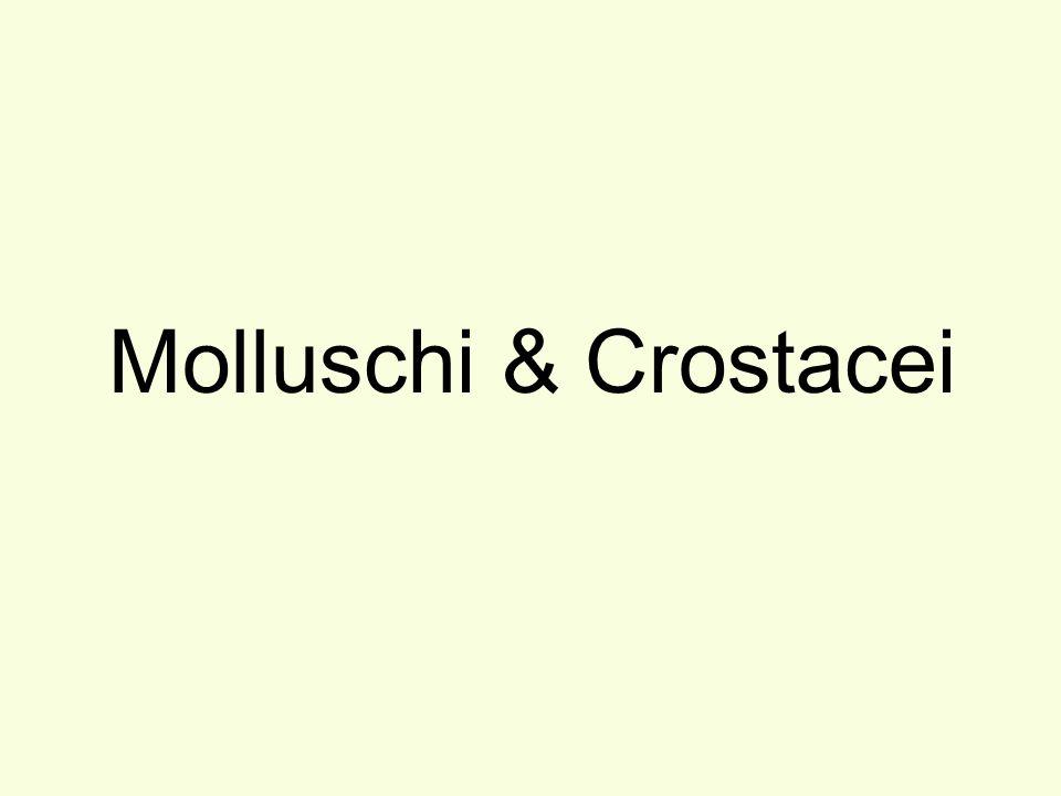 Molluschi & Crostacei