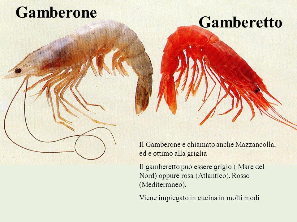 Gamberone Gamberetto Il Gamberone è chiamato anche Mazzancolla, ed è ottimo alla griglia Il gamberetto può essere grigio ( Mare del Nord) oppure rosa