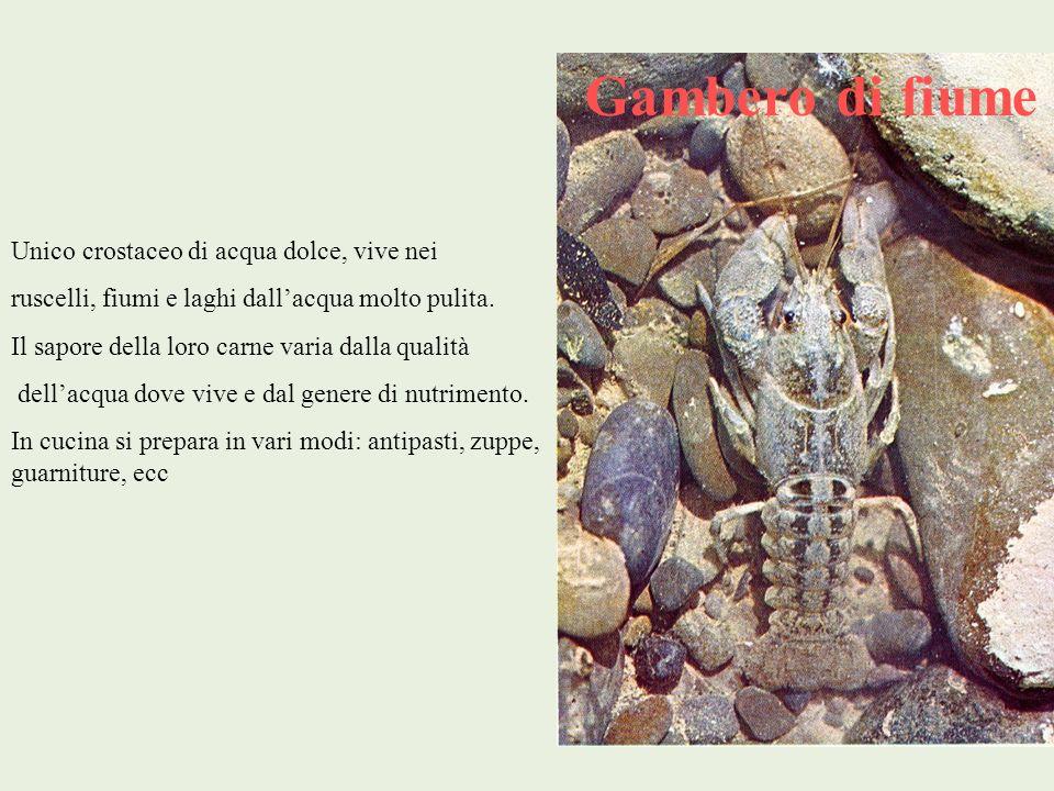 Gambero di fiume Unico crostaceo di acqua dolce, vive nei ruscelli, fiumi e laghi dallacqua molto pulita. Il sapore della loro carne varia dalla quali