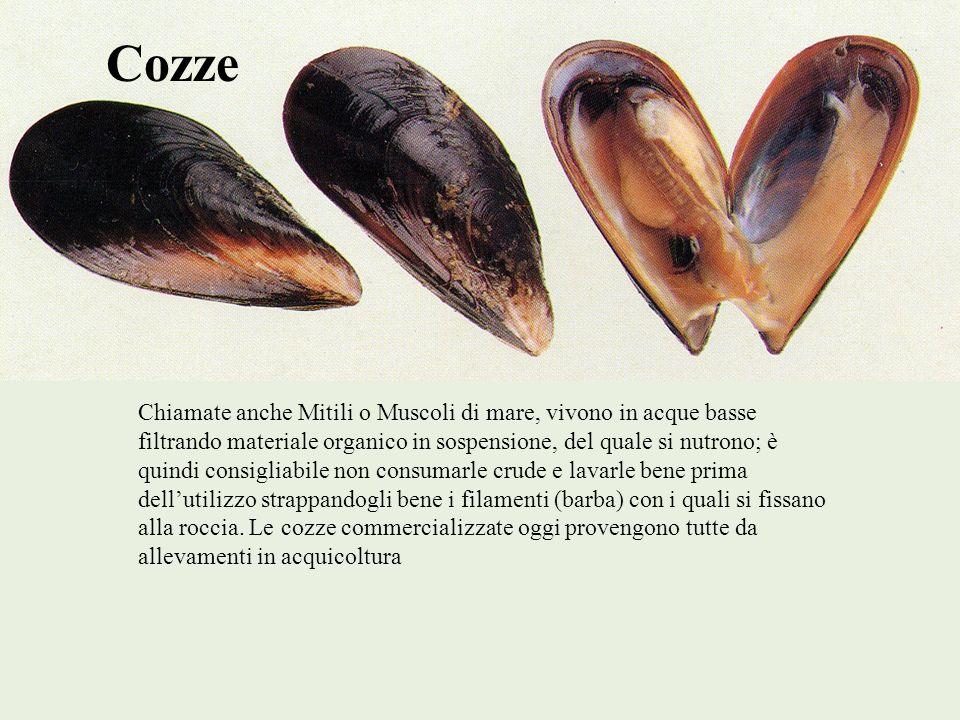 Cozze Chiamate anche Mitili o Muscoli di mare, vivono in acque basse filtrando materiale organico in sospensione, del quale si nutrono; è quindi consi
