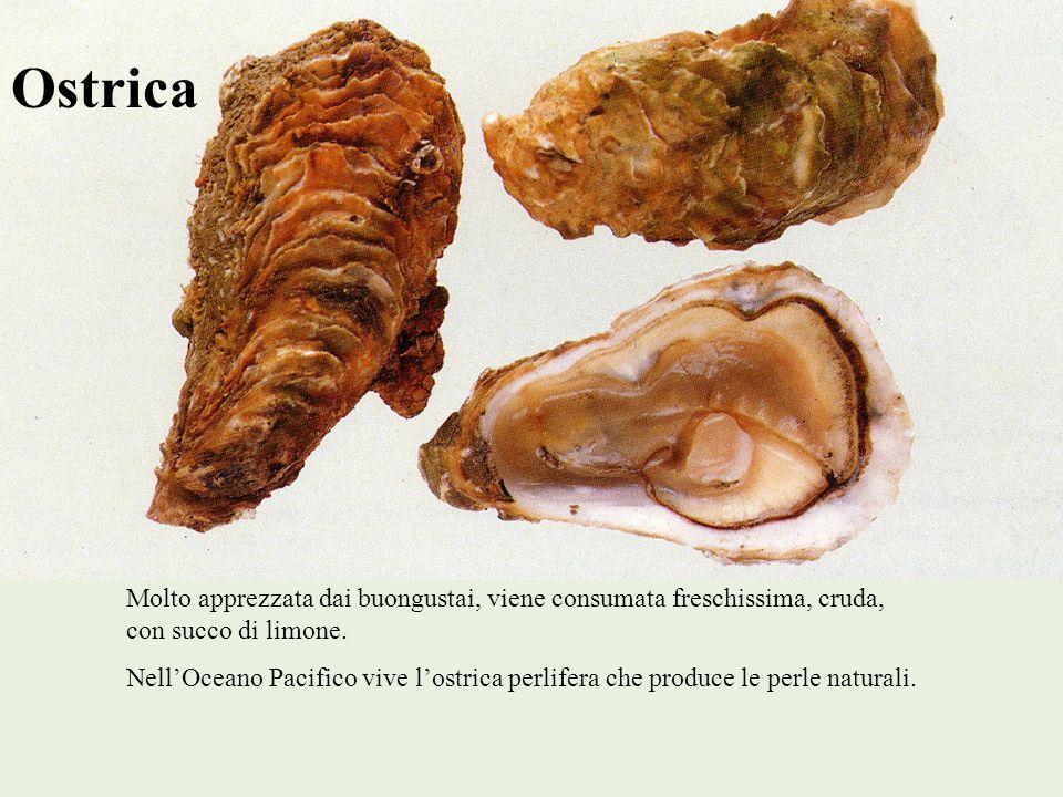Ostrica Molto apprezzata dai buongustai, viene consumata freschissima, cruda, con succo di limone. NellOceano Pacifico vive lostrica perlifera che pro
