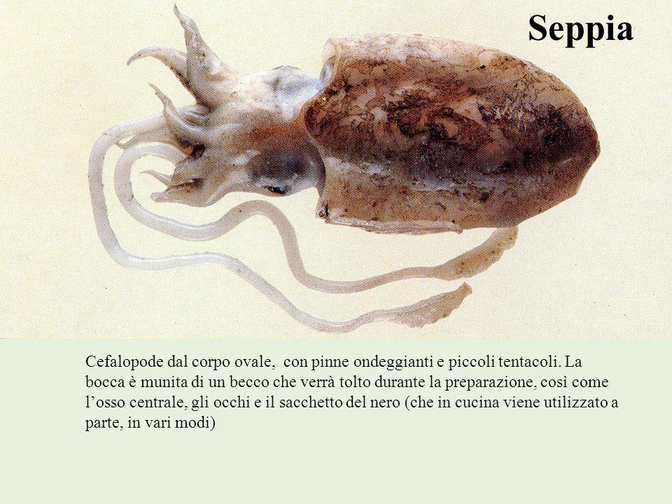 Seppia Cefalopode dal corpo ovale, con pinne ondeggianti e piccoli tentacoli. La bocca è munita di un becco che verrà tolto durante la preparazione, c