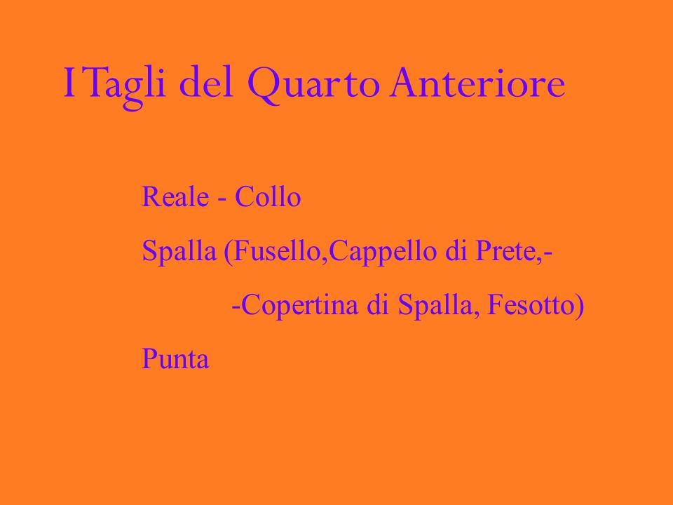 I Tagli del Quarto Anteriore Reale - Collo Spalla (Fusello,Cappello di Prete,- -Copertina di Spalla, Fesotto) Punta