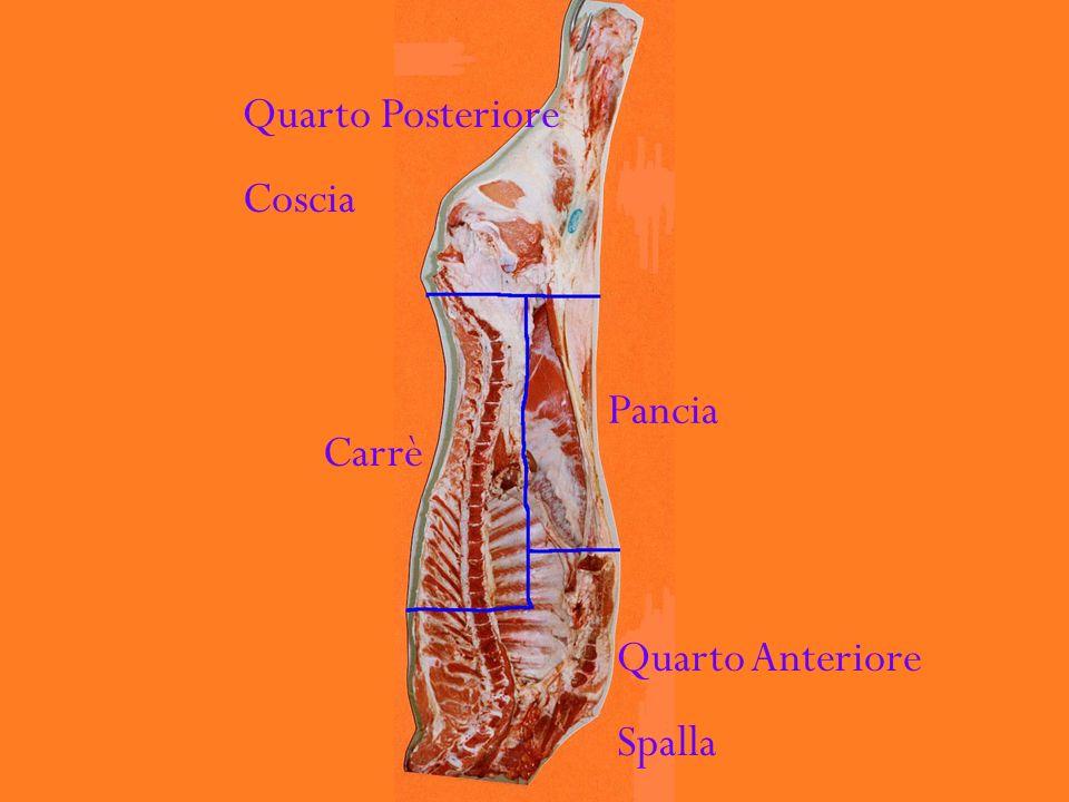 Quarto Posteriore Coscia Carrè Pancia Quarto Anteriore Spalla