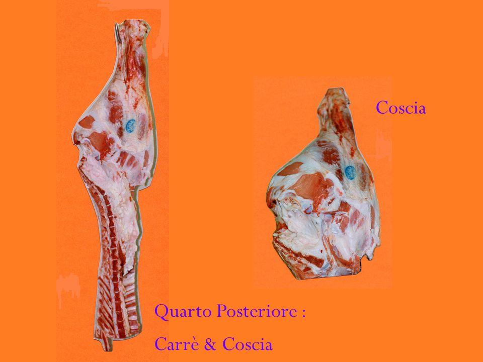 Quarto Posteriore : Carrè & Coscia Coscia