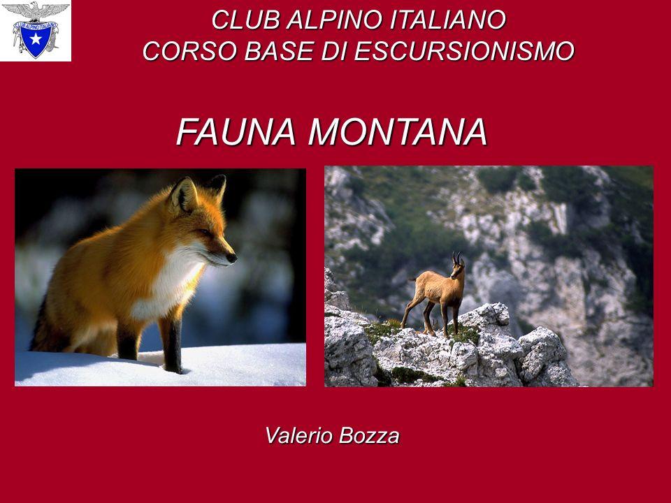 CLUB ALPINO ITALIANO CORSO BASE DI ESCURSIONISMO FAUNA MONTANA Valerio Bozza