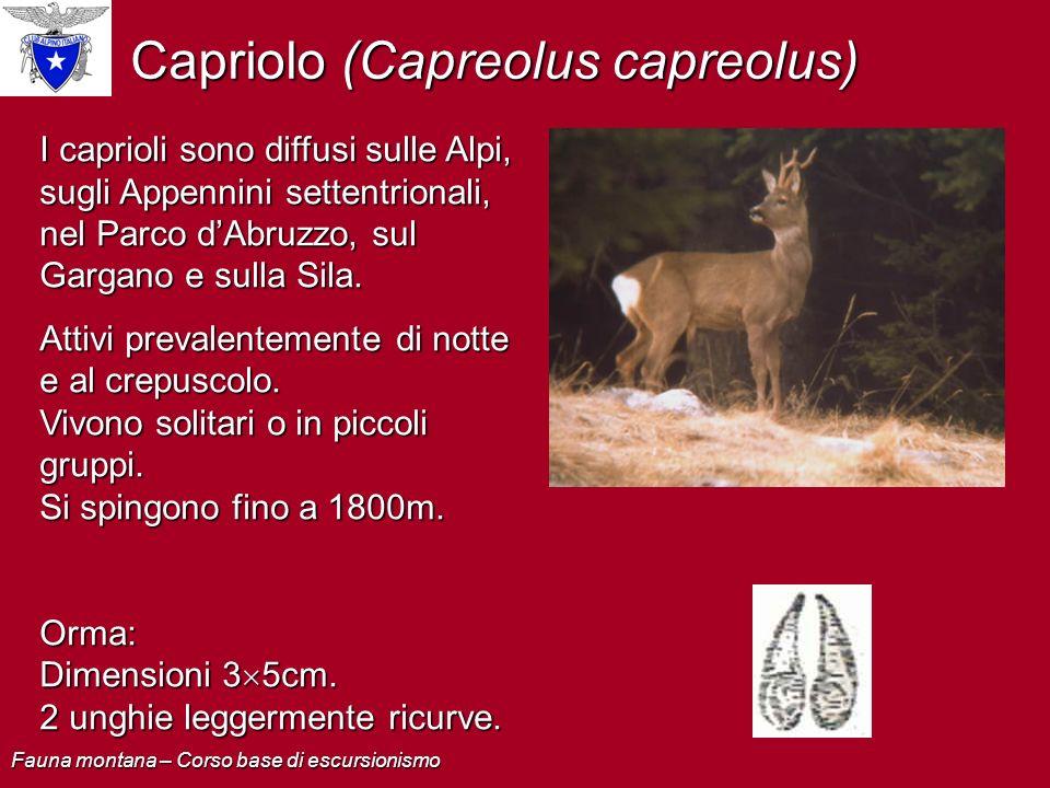 Capriolo (Capreolus capreolus) I caprioli sono diffusi sulle Alpi, sugli Appennini settentrionali, nel Parco dAbruzzo, sul Gargano e sulla Sila. Attiv