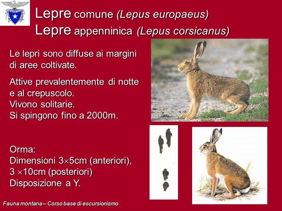 Lepre comune (Lepus europaeus) Lepre appenninica (Lepus corsicanus) Le lepri sono diffuse ai margini di aree coltivate. Attive prevalentemente di nott
