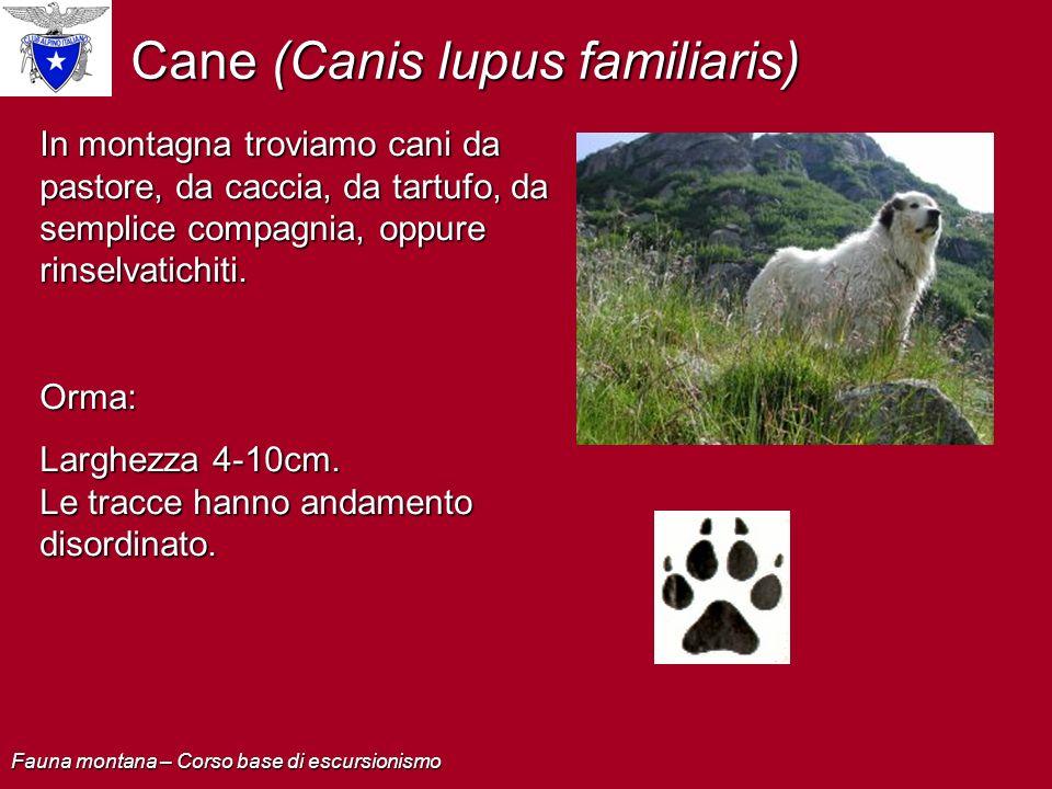 In montagna troviamo cani da pastore, da caccia, da tartufo, da semplice compagnia, oppure rinselvatichiti. Orma: Larghezza 4-10cm. Le tracce hanno an