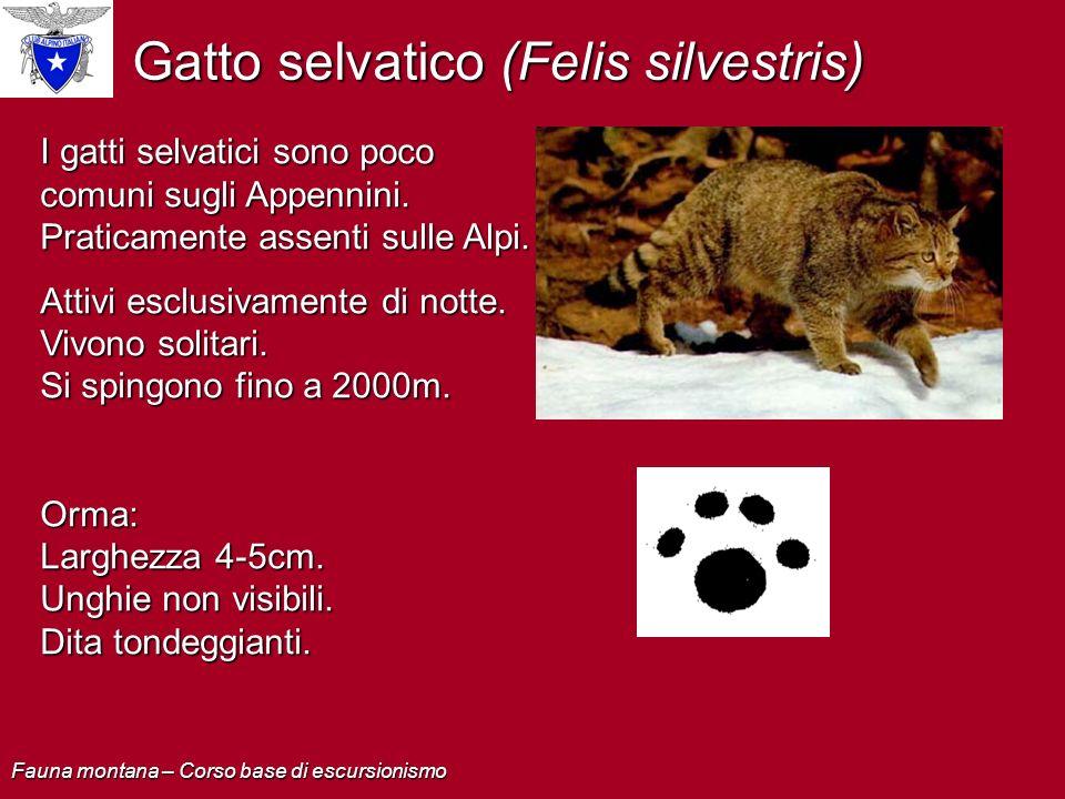 Gatto selvatico (Felis silvestris) I gatti selvatici sono poco comuni sugli Appennini. Praticamente assenti sulle Alpi. Attivi esclusivamente di notte