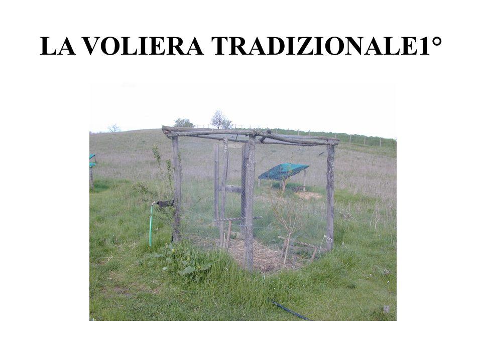 LA VOLIERA TRADIZIONALE1°