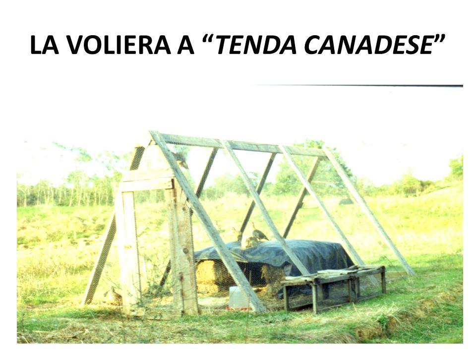 LA VOLIERA A TENDA CANADESE