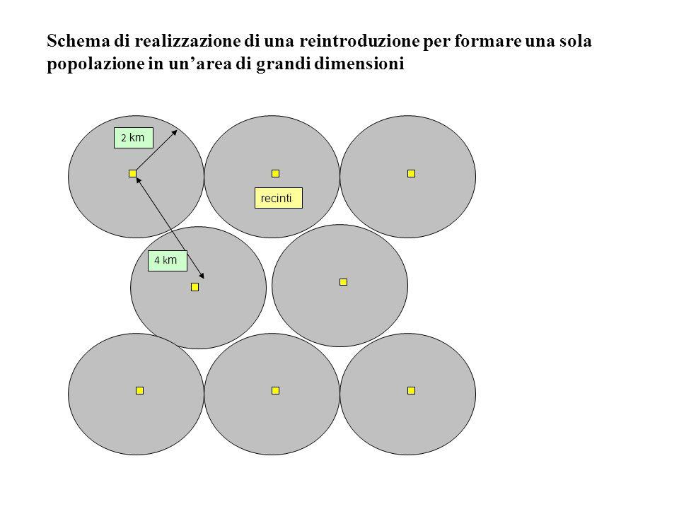 2 km 4 k m recinti Schema di realizzazione di una reintroduzione per formare una sola popolazione in unarea di grandi dimensioni