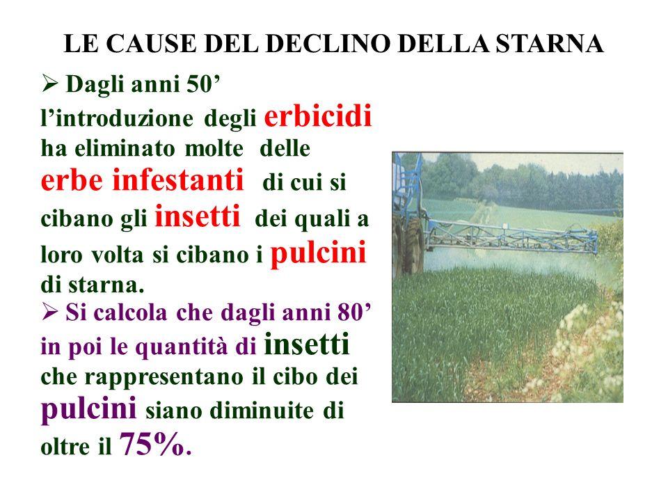 LE CAUSE DEL DECLINO DELLA STARNA Dagli anni 50 lintroduzione degli erbicidi ha eliminato molte delle erbe infestanti di cui si cibano gli insetti dei