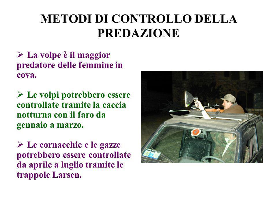 METODI DI CONTROLLO DELLA PREDAZIONE La volpe è il maggior predatore delle femmine in cova. Le volpi potrebbero essere controllate tramite la caccia n
