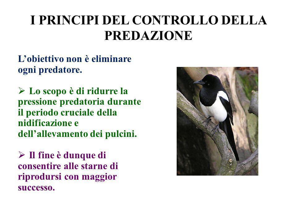 I PRINCIPI DEL CONTROLLO DELLA PREDAZIONE Lobiettivo non è eliminare ogni predatore. Lo scopo è di ridurre la pressione predatoria durante il periodo