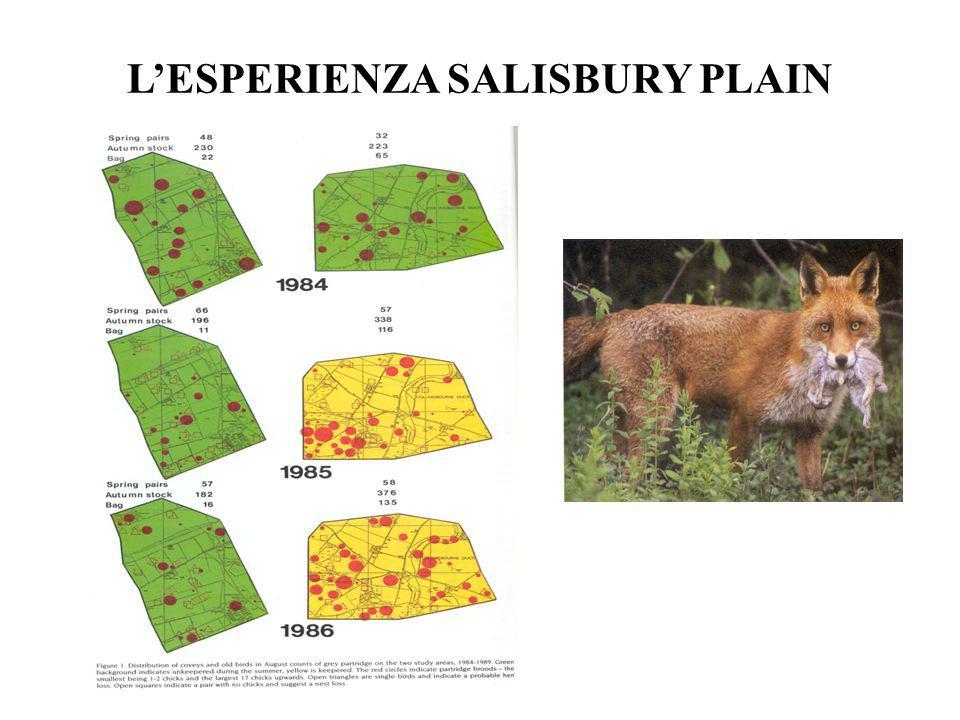 LESPERIENZA SALISBURY PLAIN