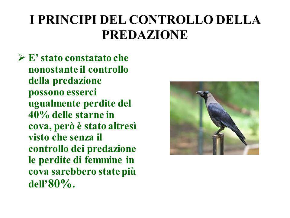 I PRINCIPI DEL CONTROLLO DELLA PREDAZIONE E stato constatato che nonostante il controllo della predazione possono esserci ugualmente perdite del 40% d