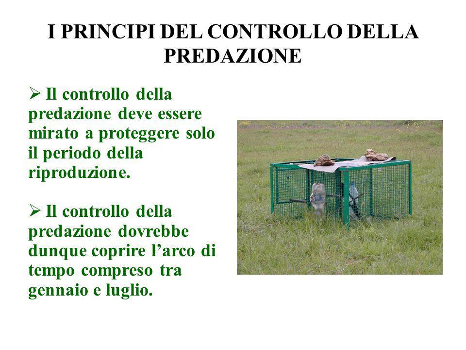 I PRINCIPI DEL CONTROLLO DELLA PREDAZIONE Il controllo della predazione deve essere mirato a proteggere solo il periodo della riproduzione. Il control
