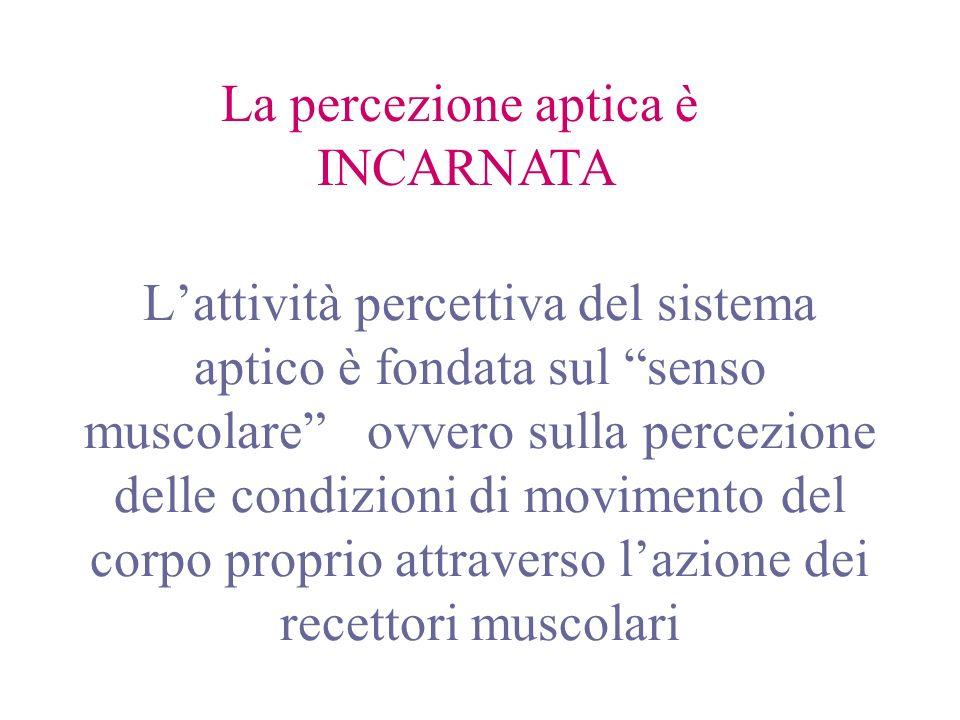 Lattività percettiva del sistema aptico è fondata sul senso muscolare ovvero sulla percezione delle condizioni di movimento del corpo proprio attraver
