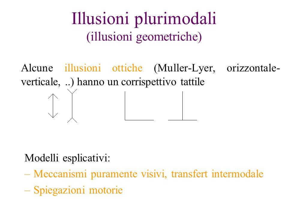 Illusioni plurimodali (illusioni geometriche) Alcune illusioni ottiche (Muller-Lyer, orizzontale- verticale,..) hanno un corrispettivo tattile Modelli